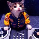DJcat
