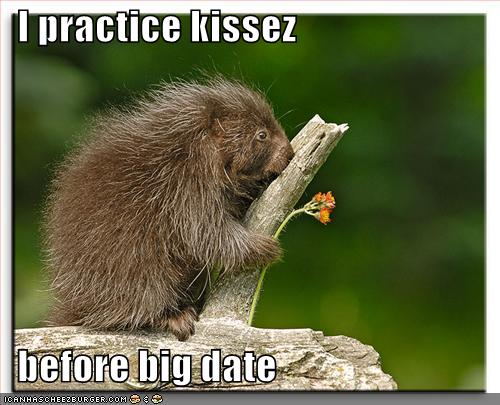 funny-pictures-porcupine-kisses-stump - Kara Swisher - News ...