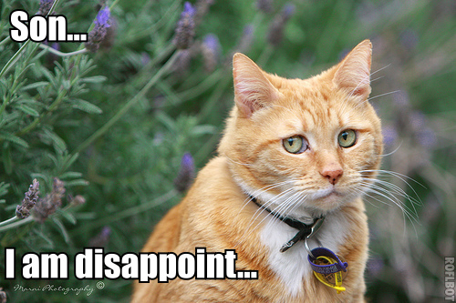 http://allthingsd.com/files/2011/10/lolcat-disappoint.png