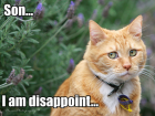 lolcat_disappointed