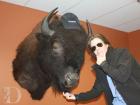 bison380