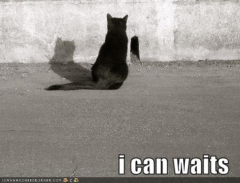 funny-pictures-cat-waits-outside-of-mousehole