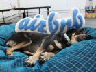 airbnbmascot