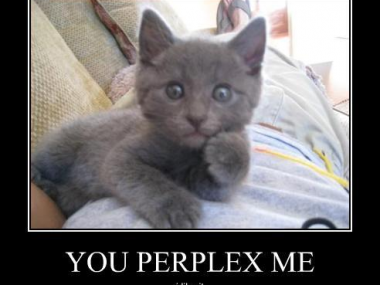 http://allthingsd.com/files/2012/02/lolcat-perplexed-380x285.png