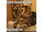 funny-pictures-cat-time-travels-feature-crop