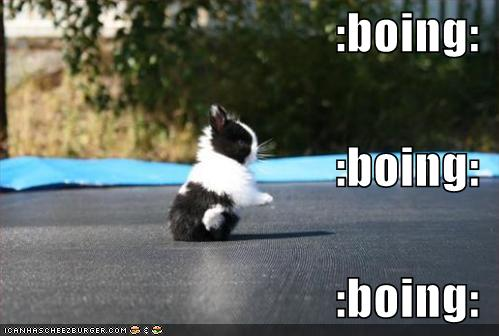 funny-pictures-little-rabbit-bounces-up-and-down1