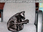 lolcat_breakup