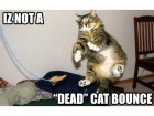 market-dead-cat-bounce-feature