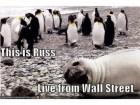 walrus-Russ