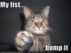 fist_bump_lolcats