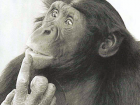 perplexed_chimp