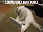 let-me-check-my-emails-lolcat-4