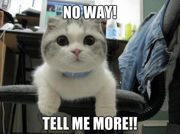 lolcats_tell_me_more