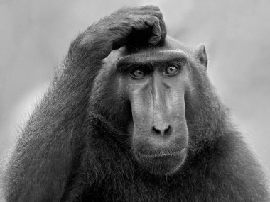 confused_ape