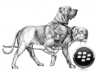 blackberry_cerberus