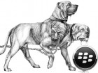 cerberus_blackberry