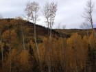 utah-fall-colors-380x285