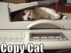 copy-cat-cats-kitten-kitty-pic-picture-funny-lolcat-cute-fun-lovely-photo-images