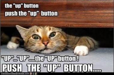 lolcat-up-button