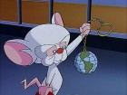 pinky-and-the-brain-WinPho