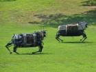 LS3 Robot Mule