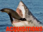 acquisitions_shark_380x285