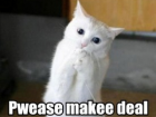 lolcat_deal_please