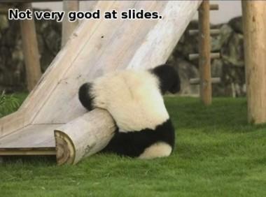 panda imgur 2