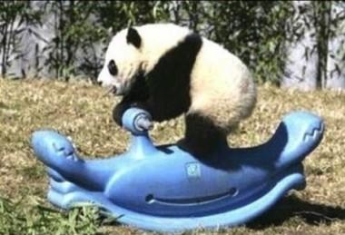 panda imgur 3