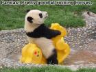 panda_imgur